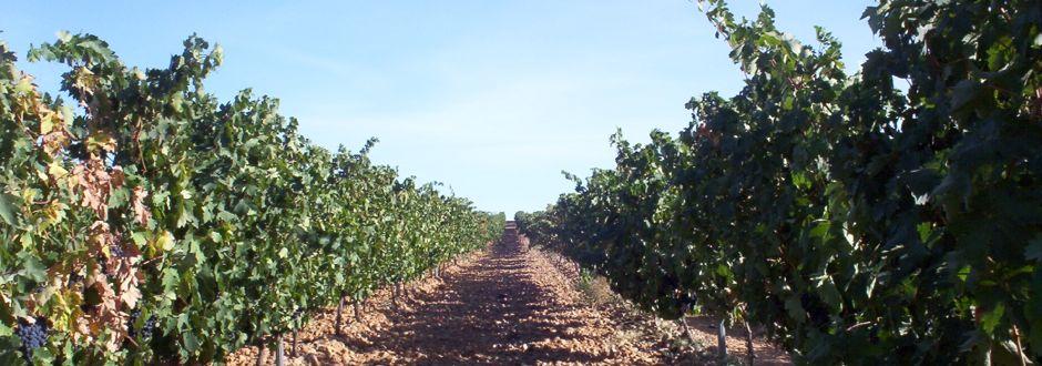 Tu Gran Viaje a la Ruta del Vino de Rueda. Foto (c) Tu Gran Viaje