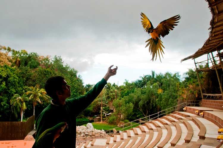 Jungle Park, Tenerife - Tu Gran Viaje