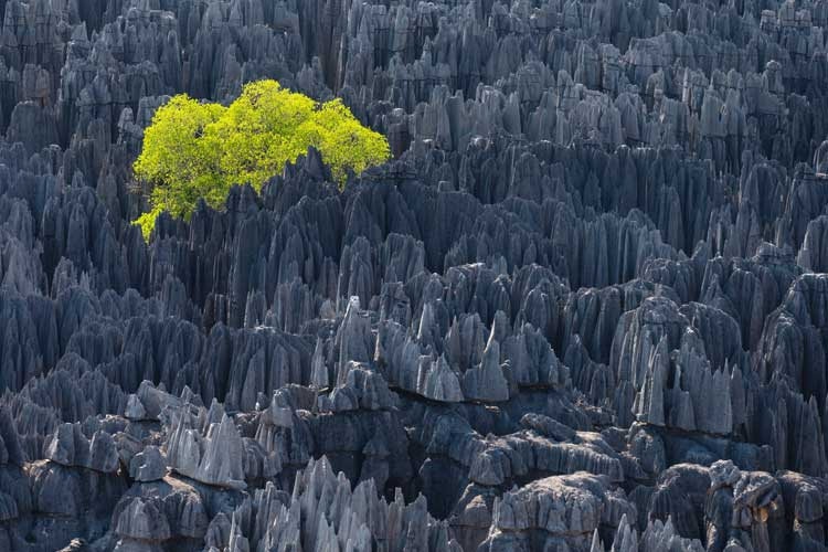 TERRA-yann-arthus-bertrand-Movie_12
