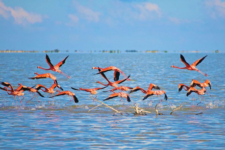 Inagua National Park. Los parques nacionales de Las Bahamas. Tu Gran Viaje. Somos Xperts