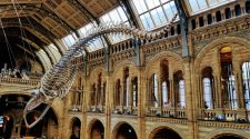 Hope, Natural History Museum of London © Tu Gran Viaje | Razones para viajar a Reino Unido en otoño | Revista Tu Gran Viaje editada por TGV Lab