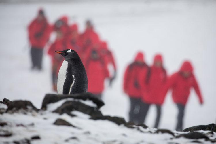 La expedicion a la Antartida del Silver Cloud | Revista Tu Gran Viaje