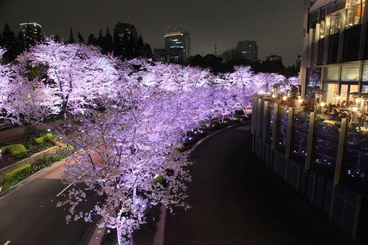 Hanami 2018 en Tu Gran Viaje | Roppongi, Tokio © Yasufumi Nishi - JNTO