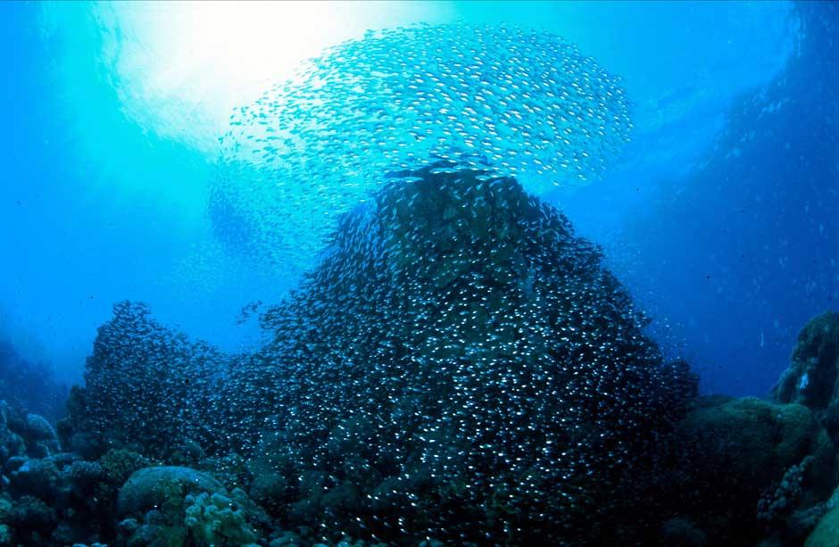 Deportes acuáticos en Egipto   Tu Gran Viaje