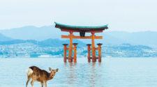 Turismo de Japón en FITUR 2019   Tu Gran Viaje