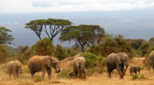 Tierra de safaris Kenia FITUR 2019   Tu Gran Viaje