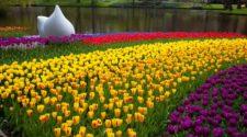 Postal desde el Parque Keukenhof, el mayor jardín de tulipanes del mundo | Tu Gran Viaje
