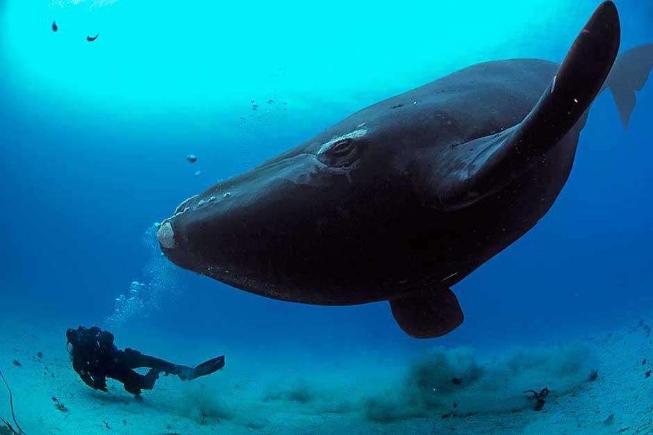 Planeta Océano: una conversación con Yann-Arthus Bertrand, el hombre que ama el planeta | Planet Ocean © Yann-Arthus Bertrand | Tu Gran Viaje