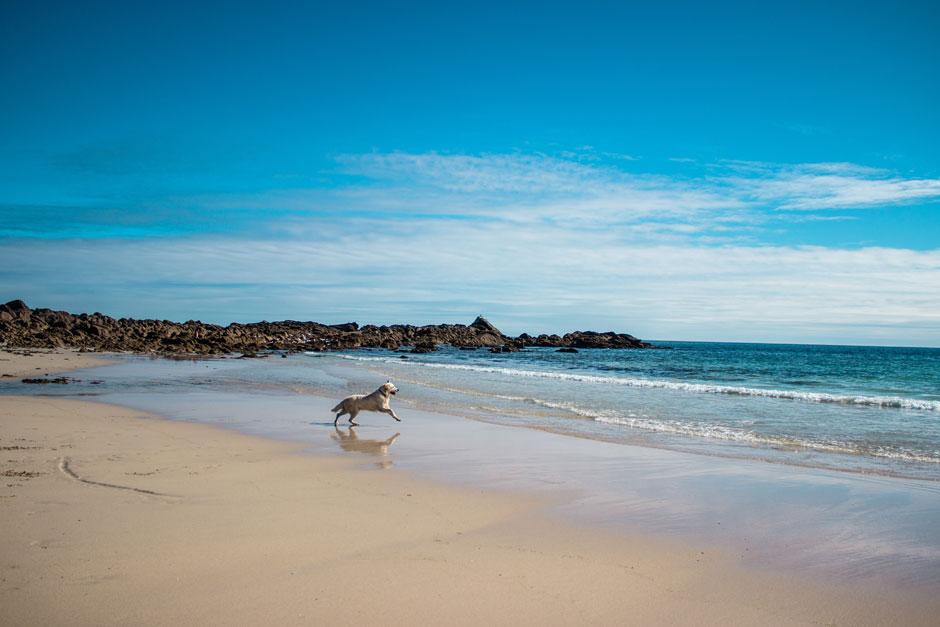 Se acabó el no poder viajar a la playa con tu perro: apunta estas cuatro estupendas playas de Andalucía para que tu mejor amigo y tú disfrutéis a tope del verano.