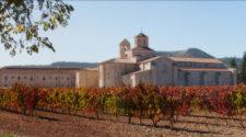 Tiempo de vendimia: enoturismo en la Ribera del Duero Tu Gran Viaje