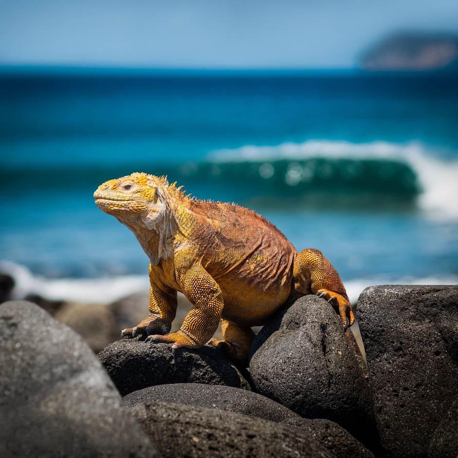 Todo lo que debes saber si vas a viajar a Islas Galápagos | Tu Gran Viaje
