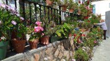 El Festival de los Balcones y Rincones de Iznájar, desde casa | Tu Gran Viaje