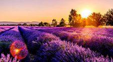Todo lo que necesitas saber para viajar a Francia este verano | Tu Gran Viaje