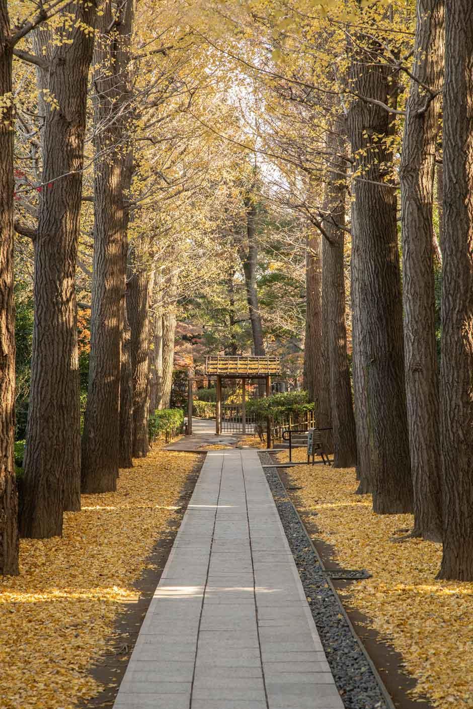 Los espectaculares lugares que visitar en Tokio en el otoño   Tu Gran Viaje