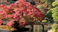 Los espectaculares lugares que visitar en Tokio en el otoño | Tu Gran Viaje