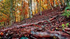 Un plan perfecto de otoño: visitar el Hayedo de Montejo | Tu Gran Viaje