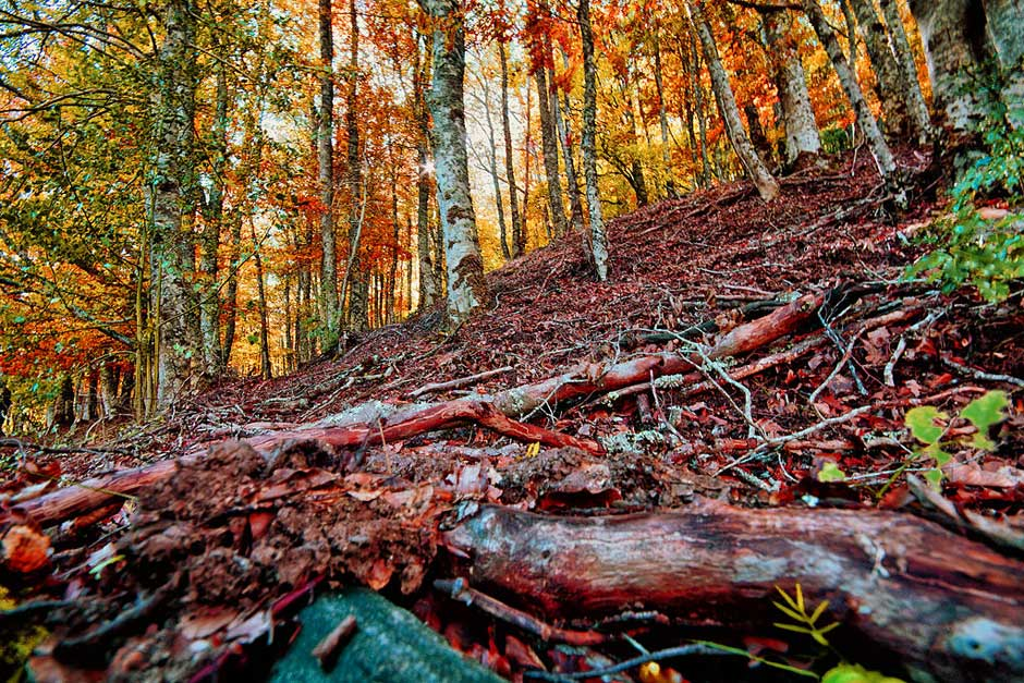 Un plan perfecto de otoño: visitar el Hayedo de Montejo   Tu Gran Viaje