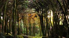 Parque Natural Sintra-Cascais. © Turismo de Portugal