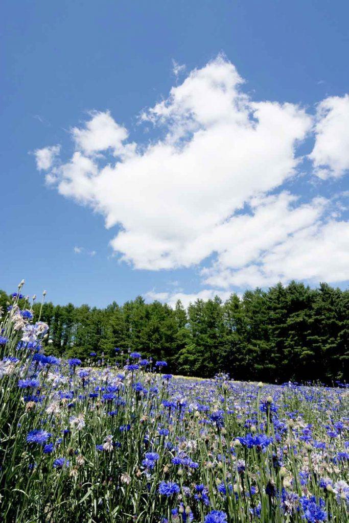 Visitar Hokkaido paraíso de las flores de Japón | Viajar a Japón | Tu Gran Viaje
