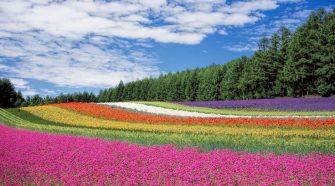 Visitar Hokkaido paraíso de las flores de Japón   Viajar a Japón   Tu Gran Viaje